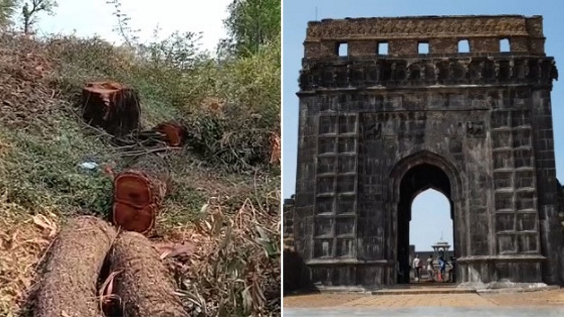 Raigad fort, Tree cut, beautification, marathi news, maxmaharashtra